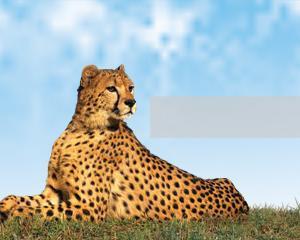 Plantilla PowerPoint Leopardo Gratis PPT Template