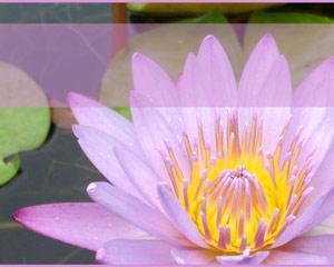 Plantilla PowerPoint con Flores y Enredadera PPT PPT Template