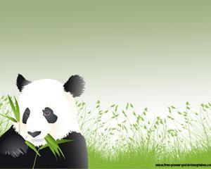 Oso Panda Plantilla Powerpoint