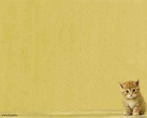 Little Cat Powerpoint Template